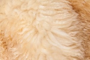 sheepskin leather wool side